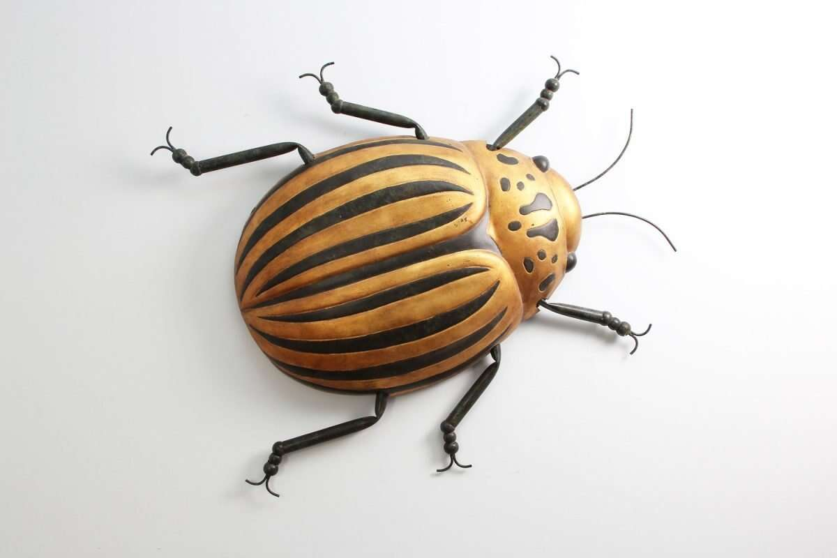Beetle Bug Wall Art sculpture by Henry Forwood 2