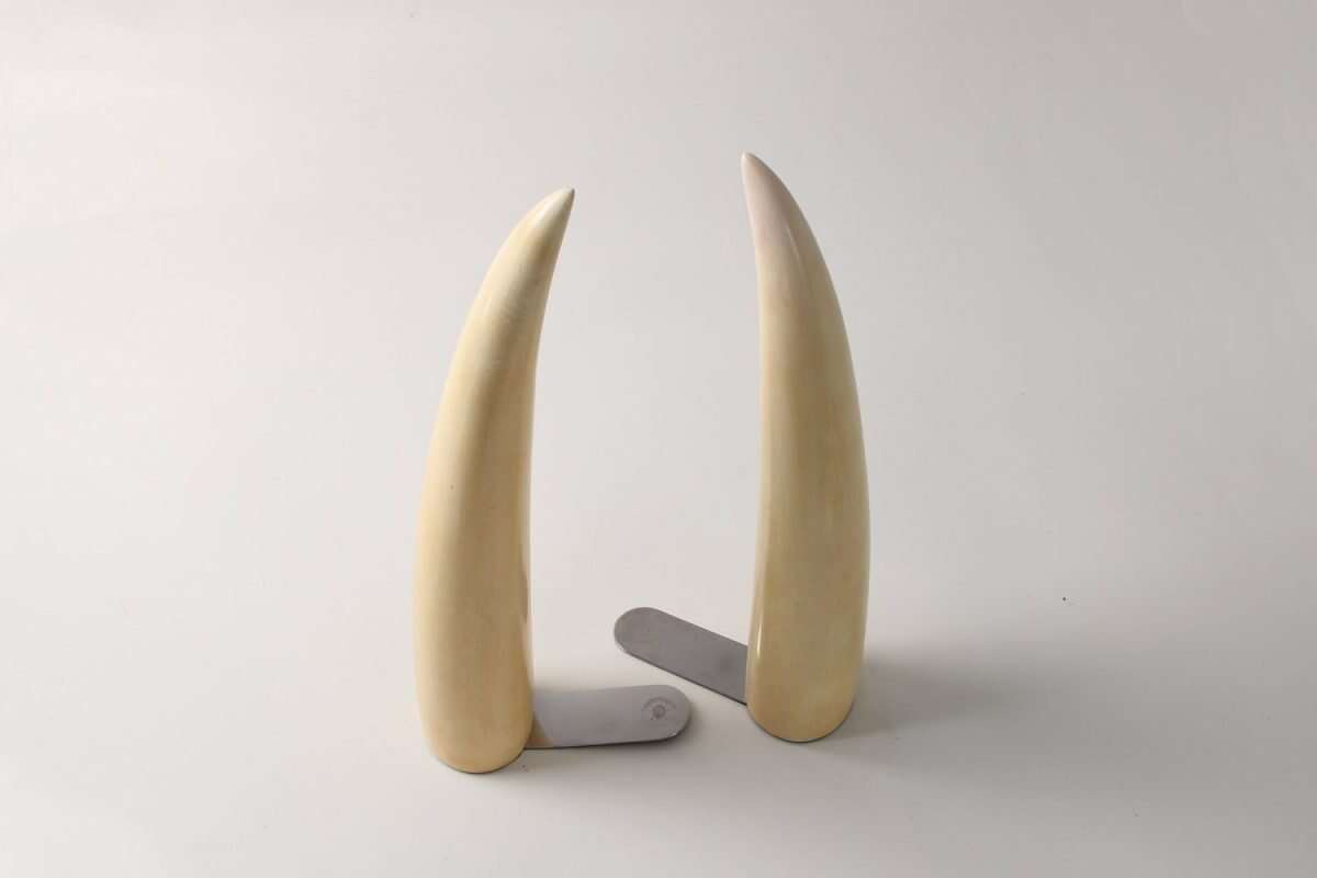 Faux Tusk Bookends by Forwood Design 5