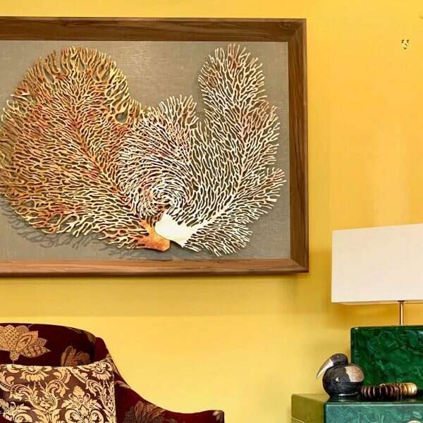 Coral Wall Art Sculpture by Henry Forwood 7